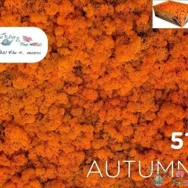 Licheni vrac Autumn