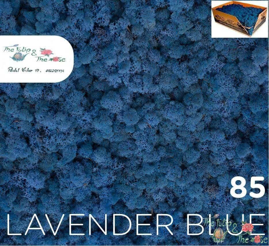 Licheni vrac Azur Blue