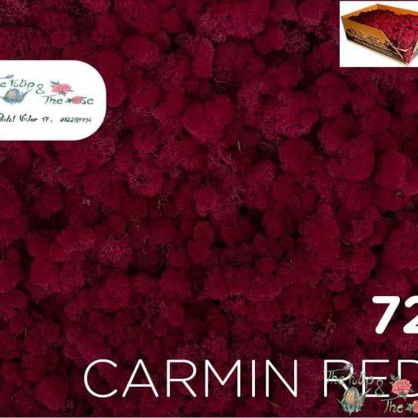 Licheni vrac Carmin Red