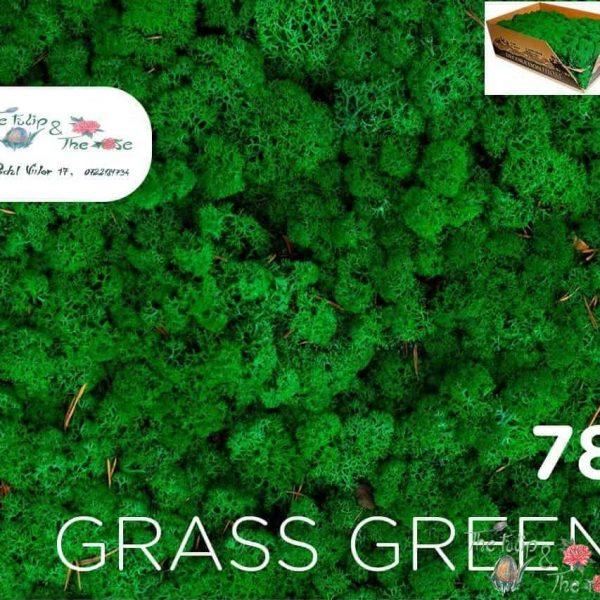 Licheni vrac Grass Green