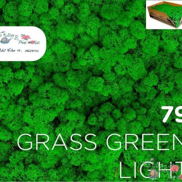 Licheni vrac Grass Green Light