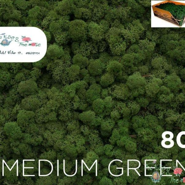Licheni vrac Medium Green