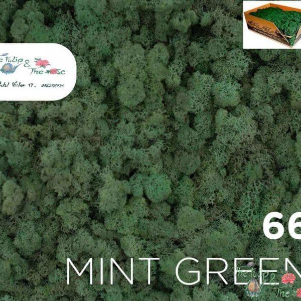 Licheni vrac Mint Green