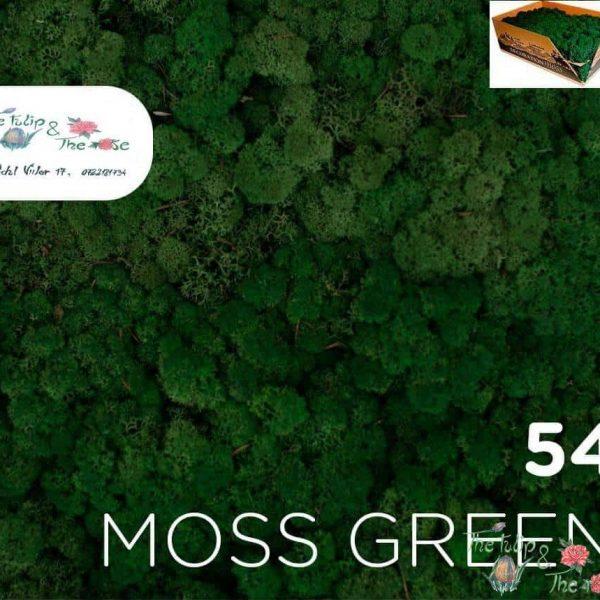 Licheni vrac Moss Green