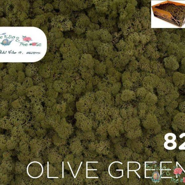 Licheni vrac Olive Green