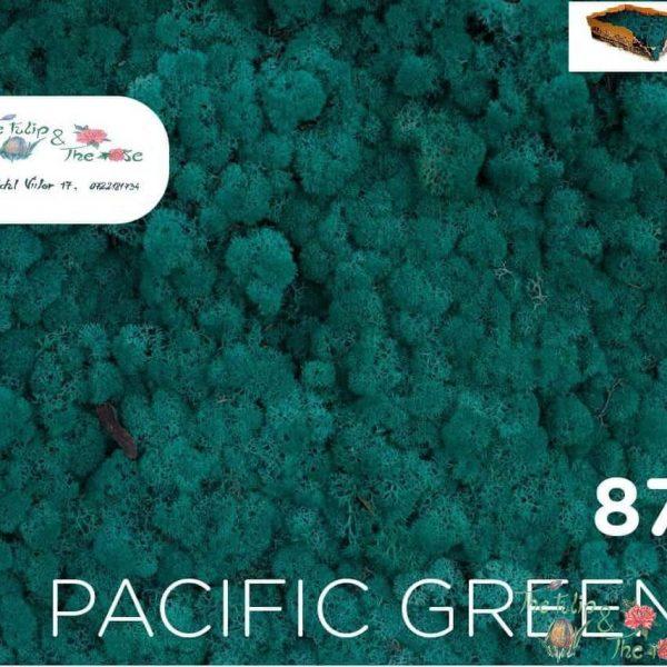 Licheni vrac Pacific Green