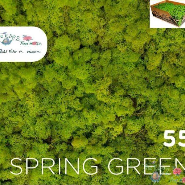 Licheni vrac Spring Green