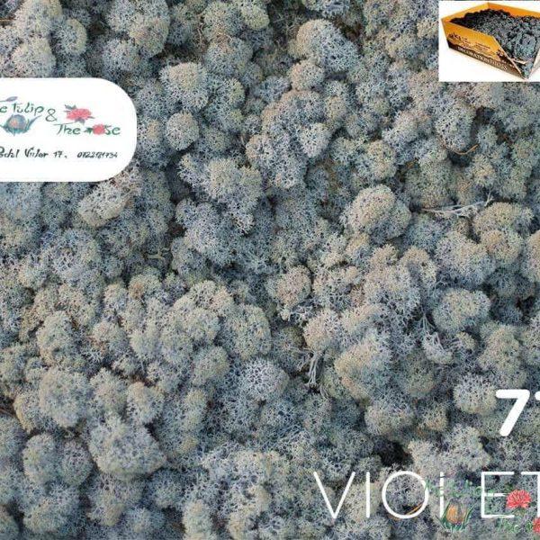 Licheni vrac Violet
