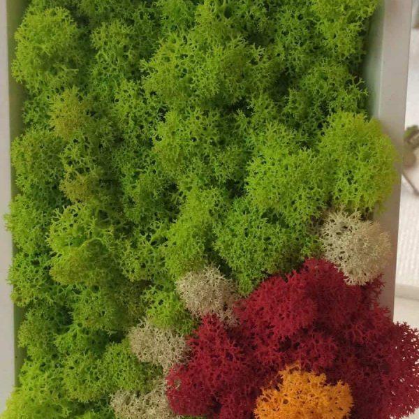 Tablou Licheni Floare 1