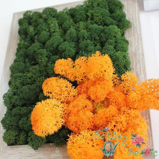 Tablou Licheni Floare 2