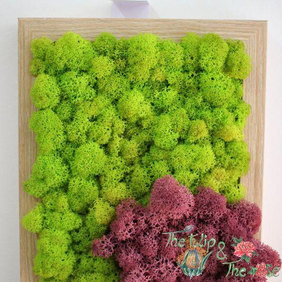 Tablou Licheni Floare 3