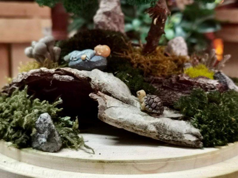 aranjamente-licheni