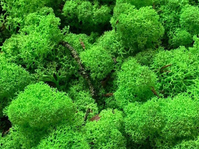 licheni-vrac